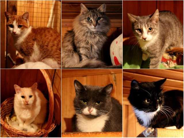 Отдам даром Кошки из приюта ищут дом.