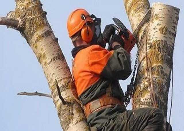 Предложение: Валка, спил деревьев