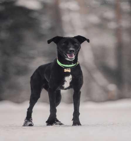 Отдам даром Ищет дом самая чудесная собака Ирада!