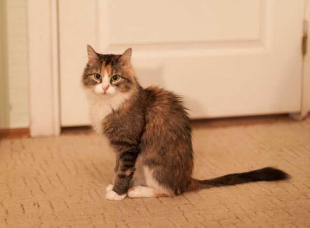 Отдам даром Молодая кошка в заботливые руки