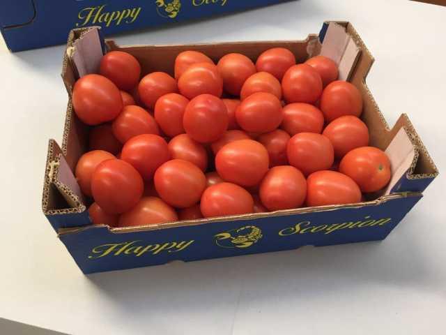Продам Продаем томаты из Испании