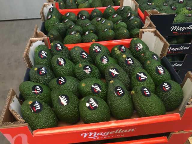 Продам Продаем авокадо из Испании