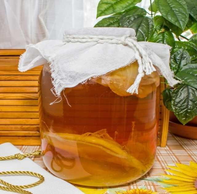Продам Чайный гриб Kombucha