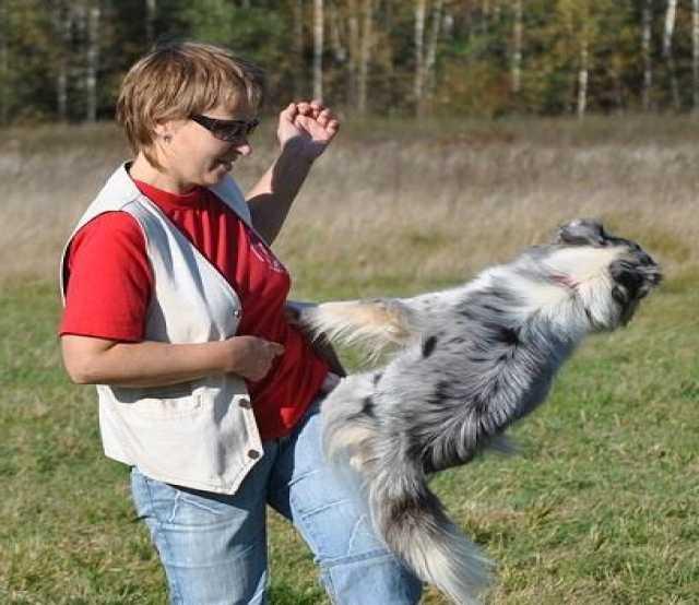 Предложение: трюковая дрессировка собак