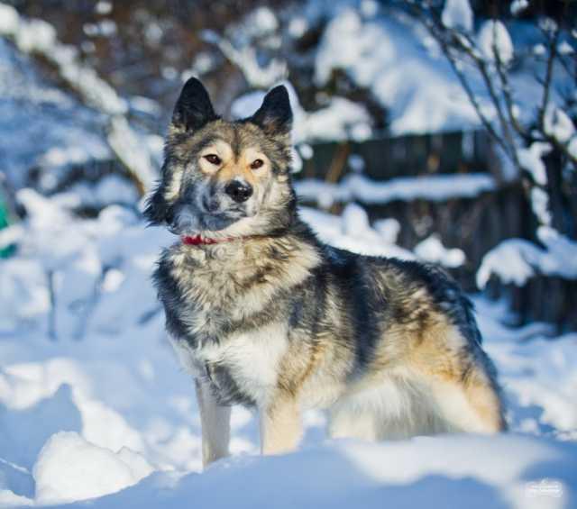 Отдам даром Красивая собака Луна в добрые руки.