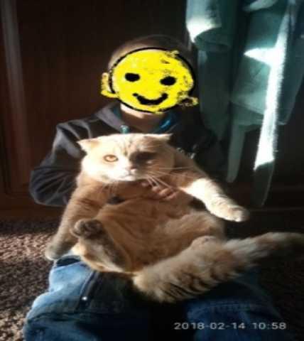 Продам Кот на вязку