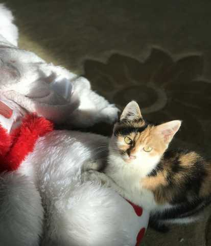 Отдам даром Отдадим даром очень ласкового котёнка