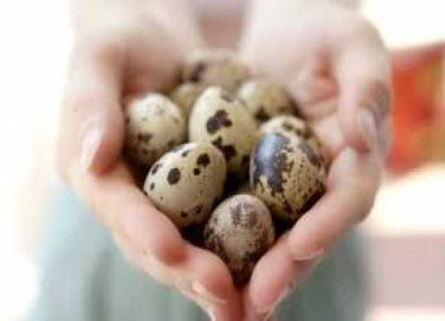 Продам: перепелиные яйца