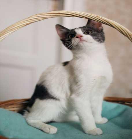 Отдам даром Три котенка ищут дом