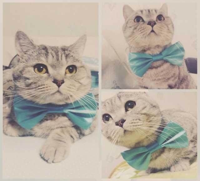 Предложение: Кот ищет кошечку