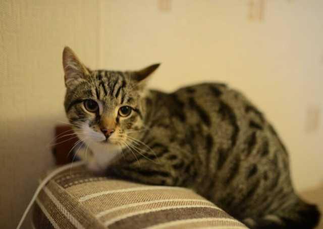 Отдам даром котенок-подросток Тиша в добрые руки (по