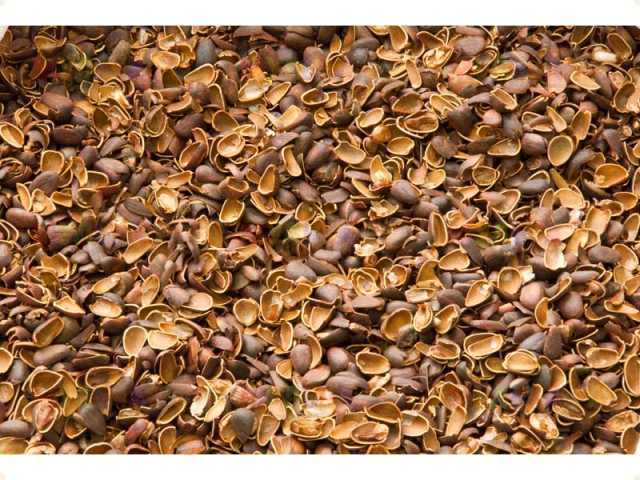 Продам МУЛЬЧА (скорлупа кедровых орехов)