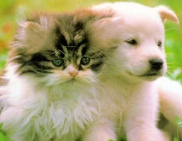 Продам Купить : Ветеринария.