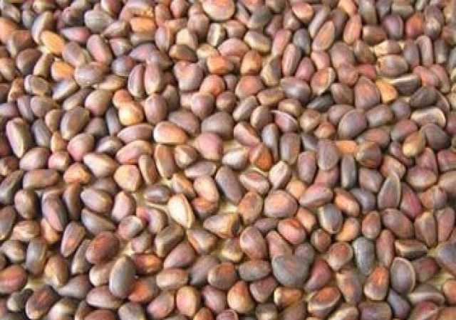 Продам кедровый орех