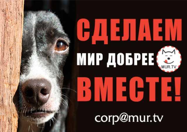 Предложение: Помощь животным. Сделаем мир лучше!