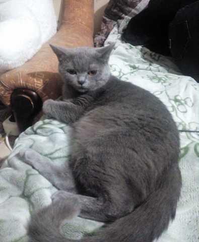 Предложение: Вязка кошки