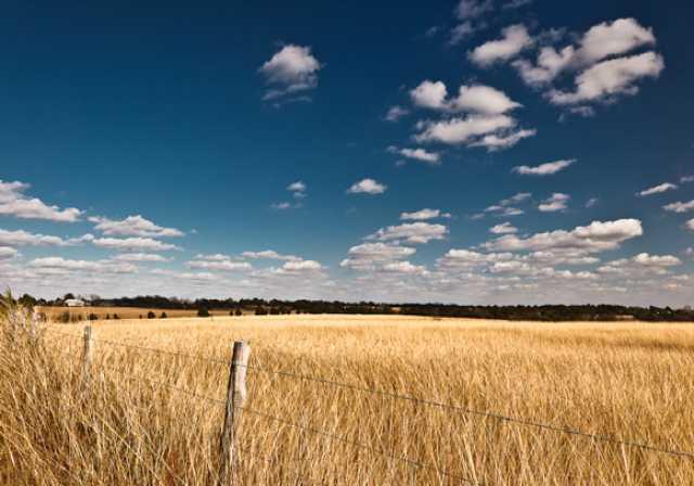 Продам пшеница