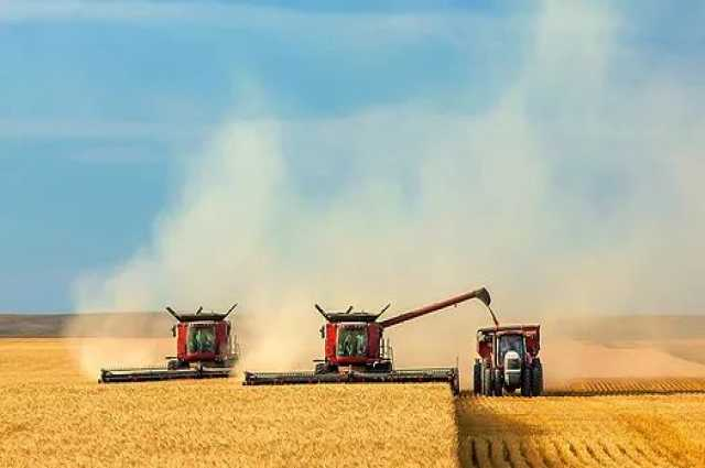 Продам Продаем пшеницу фураж/прод., кукурузу, я
