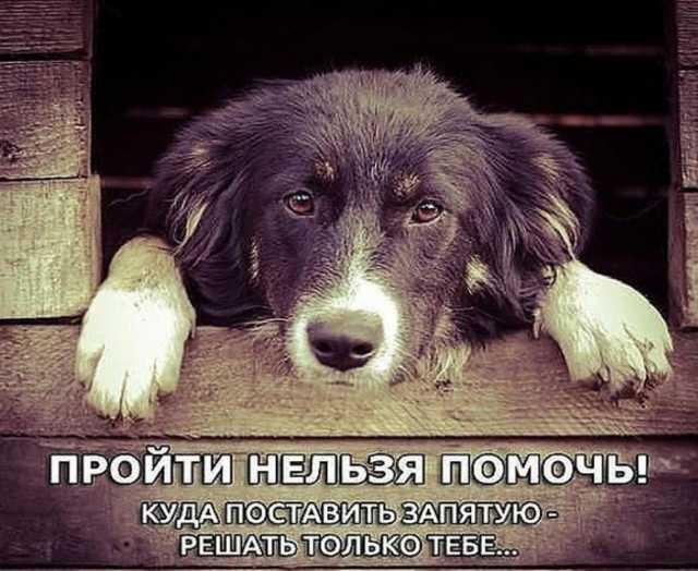 Предложение: Приюты для животных - Краудфандинг Униве