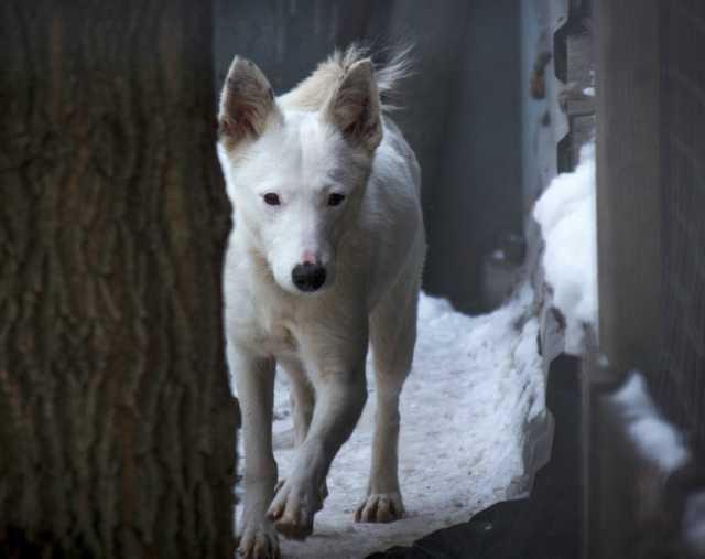 Отдам даром Очаровательная собачка Сима в добрые рук