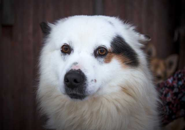 Отдам даром Молодой пес Бублик ищет дом.