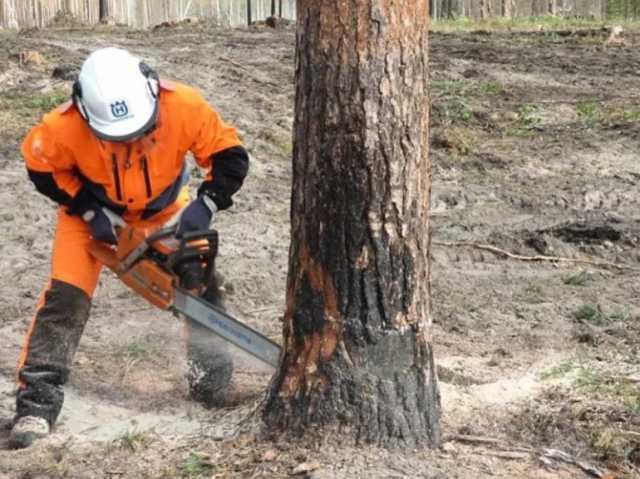 Предложение: Обрезка, Спил Аварийных Деревьев