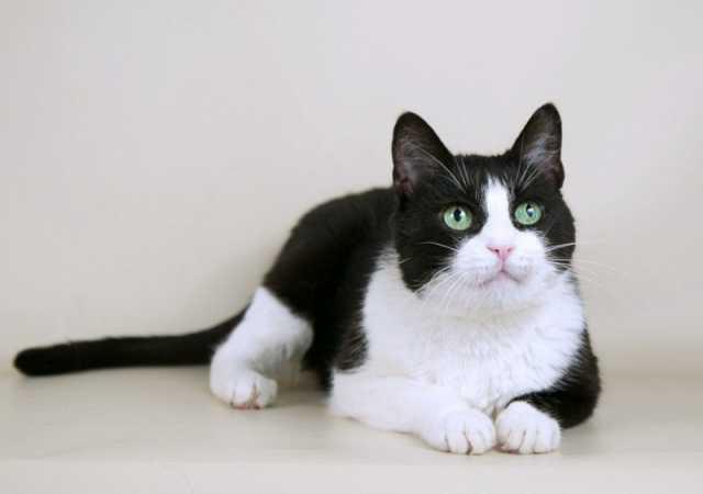 Отдам даром Умная красивая кошка Марта в добрые руки