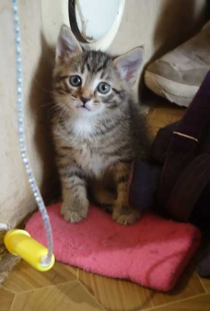 Отдам даром Пушистые котята очень милые и игривые