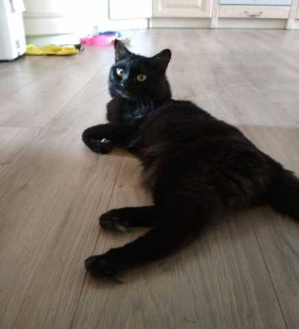 Отдам даром Черный кот