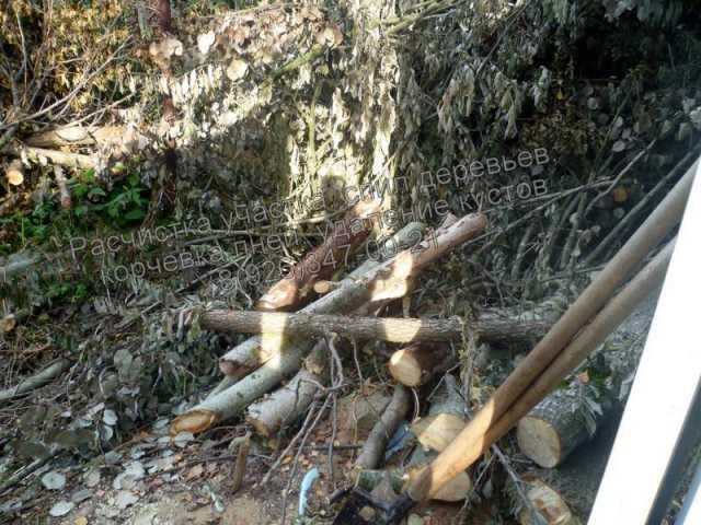 Предложение: Расчистка участка от кустарника.Покос.