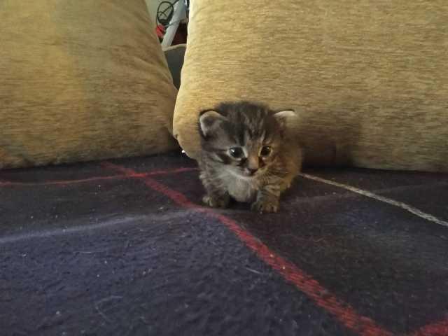 Отдам даром Отдам котят