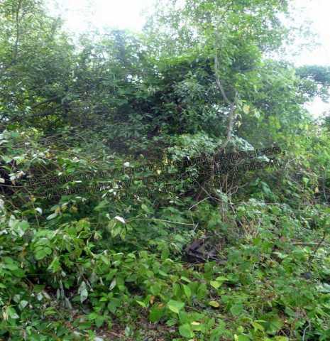 Предложение: Расчистка участка от кустарника, вырубка