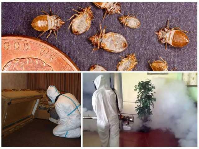 Предложение: Уничтожение насекомых.Обработка.Гарантия