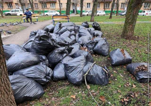 Предложение: Уборка территории. Сбор и вывоз листьев
