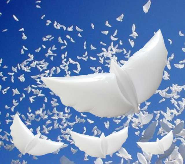Предложение: Био голуби. Воздушные шары голуби