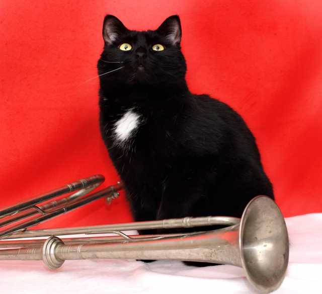 Отдам даром Котополководец Суворов, черный кот, 1 го