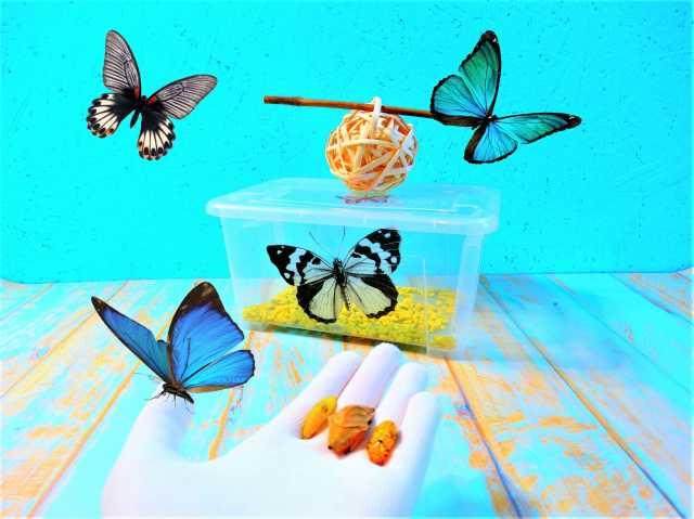 Продам Домашняя ферма бабочек. Маджонг бабочки