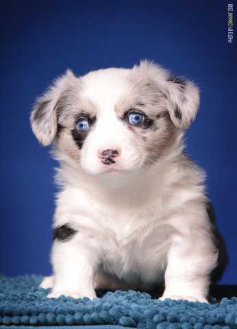 Продам Собаки и щенки