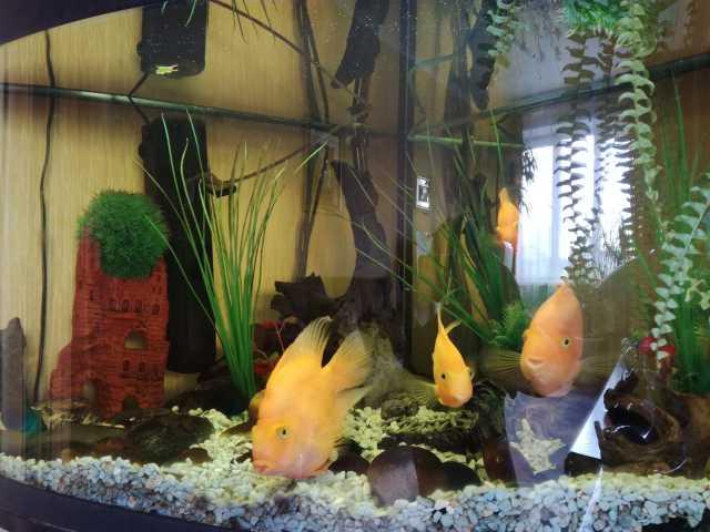 Продам аквариум 200л угловой с тумбой