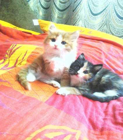Отдам даром: Котята от кошки мышеловки