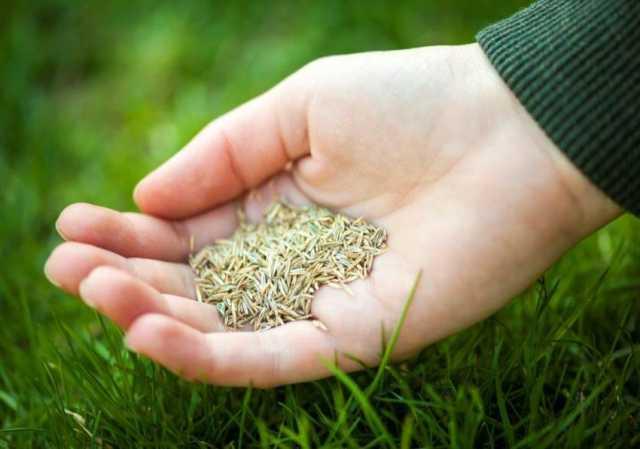 Продам: Травосмеси для гидропосева