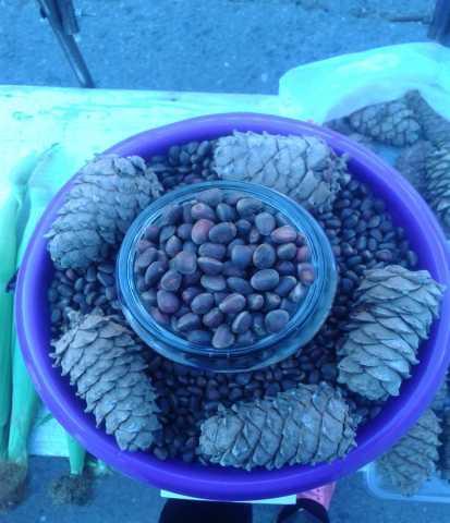 Продам Свежий Сибирский кедровый орех 2017