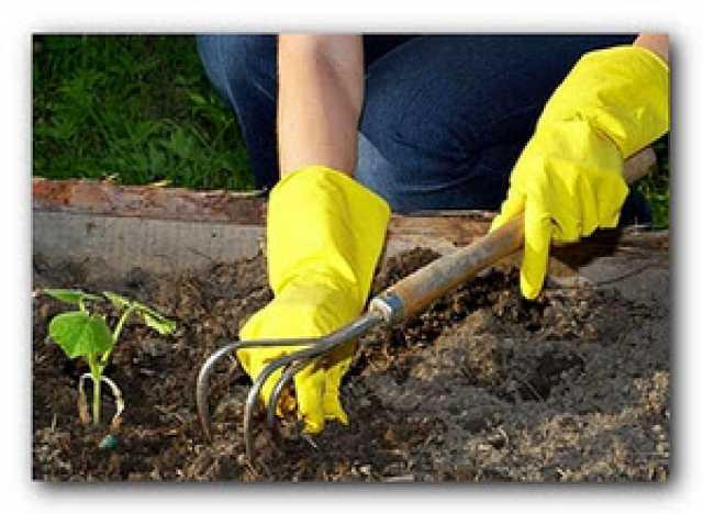 Предложение: Дачные работы, копка огорода, уборка