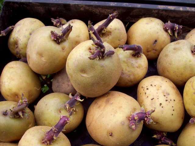 Продам Картофель на посадку - множество сортов