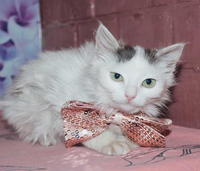Отдам даром Милый котенок Корица в добрые руки!