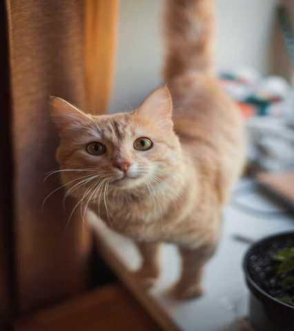 Отдам даром Кот