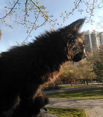 Отдам даром Красивый черный котенок