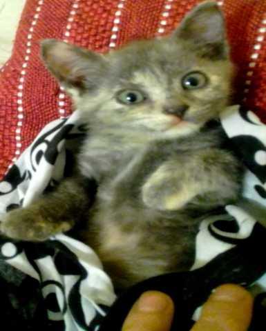 Отдам даром Очень красивые котята