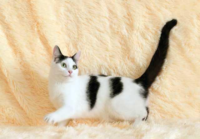 Отдам даром Шиповник 8 мес.: водоплавающий кот