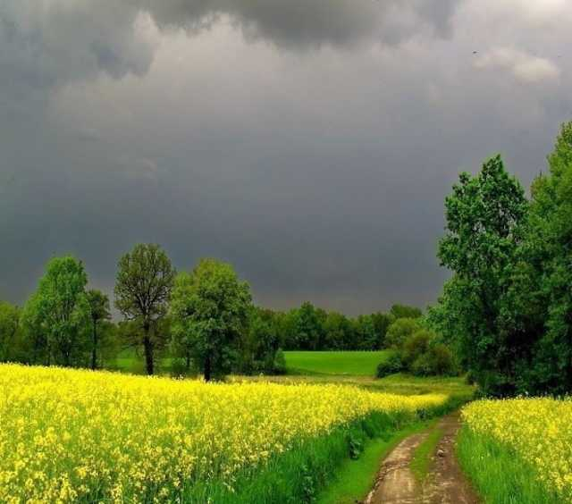 Продам: Земли Сельхоз назначения